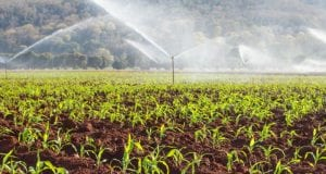 Seedlings grow out of soil while hoses spray in background