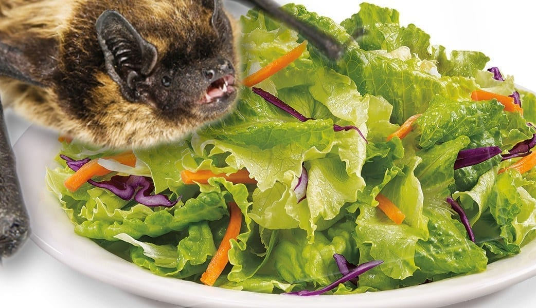 Image of a salad and head of a bat