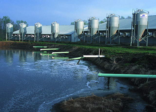 Pipes lead from a confined hog farm to a manure lagoon on the open air.