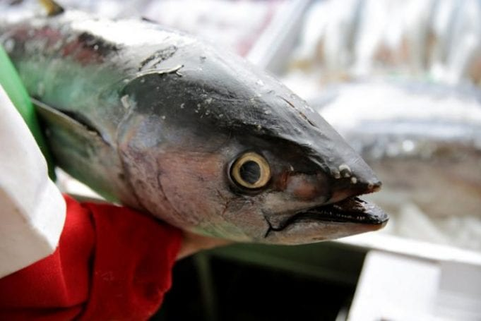Rubber-gloved hands clasp a tuna on display at a market in Mexcio City.