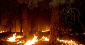 Fire burns around trees at night in Gila National Forest.