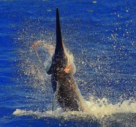 Environmentalists Push to Keep Bycatch from Being Snagged
