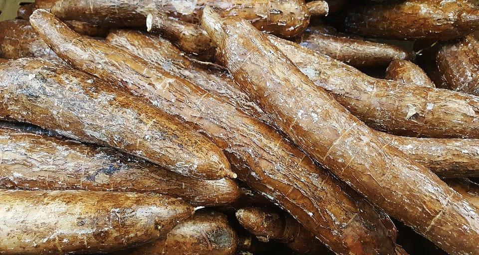 Cassava roots.