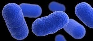 Image of Listeria Bacteria