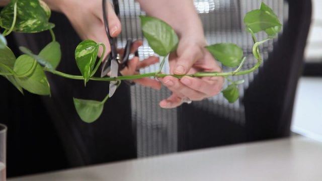 Office Plant Placement Leads to Racial Discrimination Case