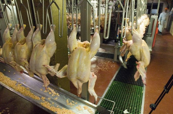 A chicken processing facility in Accomac, VA.