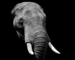 """Judge Calls Elephant Personhood Case """"Frivolous"""""""