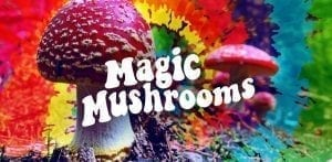 Counselor Couple Pushes to Legalize 'Magic Mushrooms' in Oregon