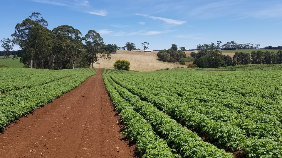 Image of a farm