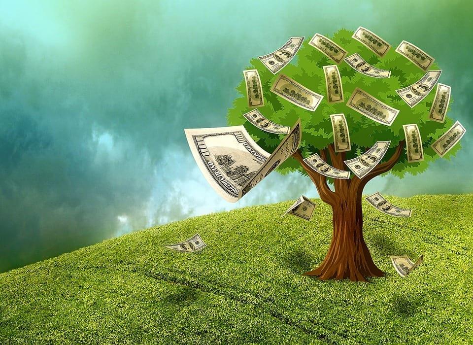 Image of a Money Tree