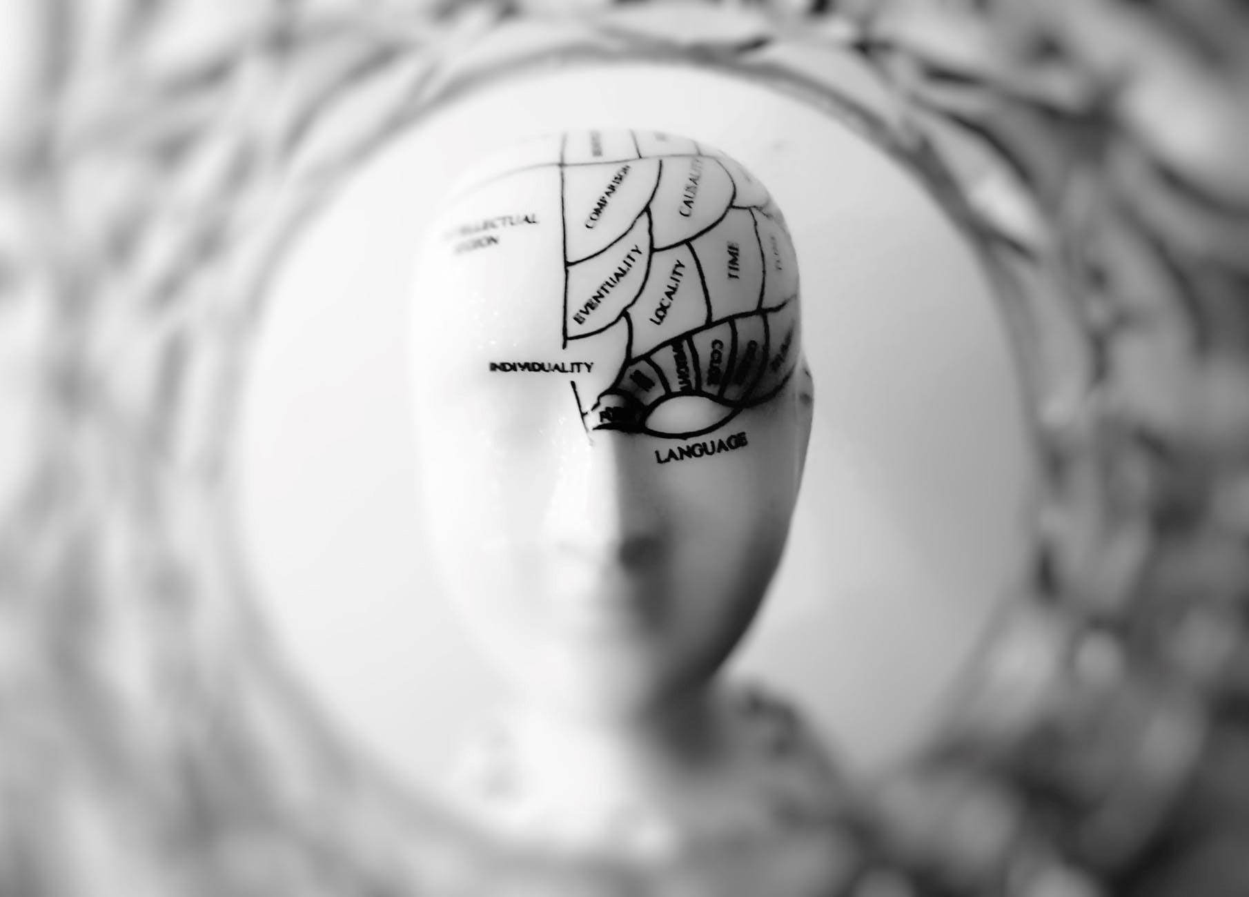 Graphic of human head with various cognitive functions drawn onto it; image by Meo, via Pexels, CC0.