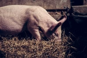World's Largest Pork Producer Ordered to Pay $25 Million