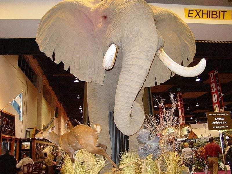 Image of a Taxidermy display from SCI 2011 Hunter's convention