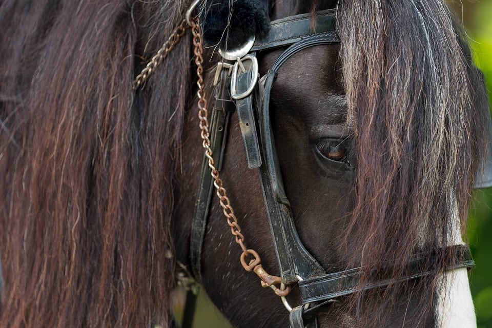 Image of a horse