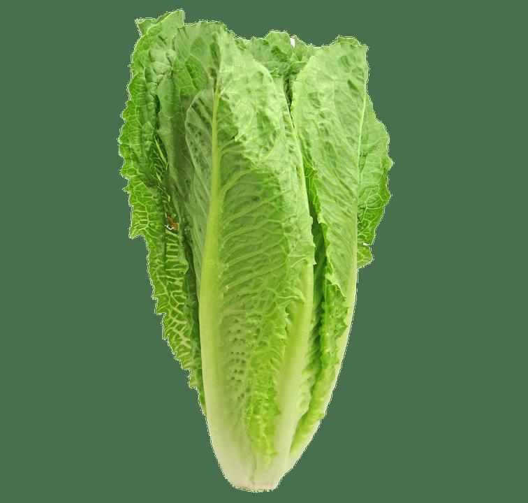 Image of Romaine Lettuce