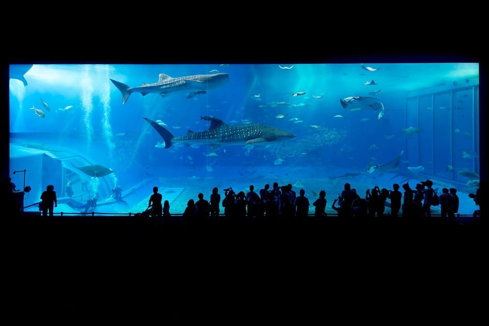 Image of a Shark Exhibit at an Aquarium
