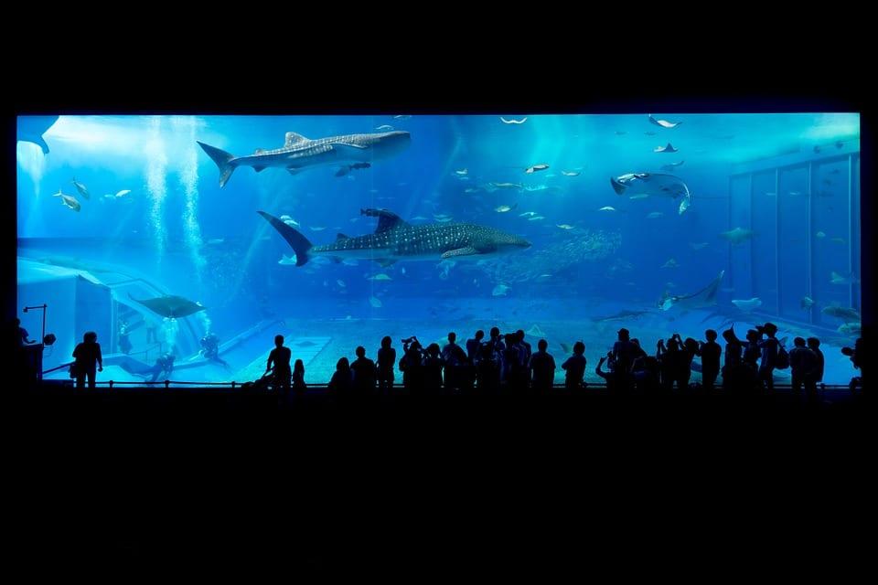 An aquarium in Okinawa, Japan