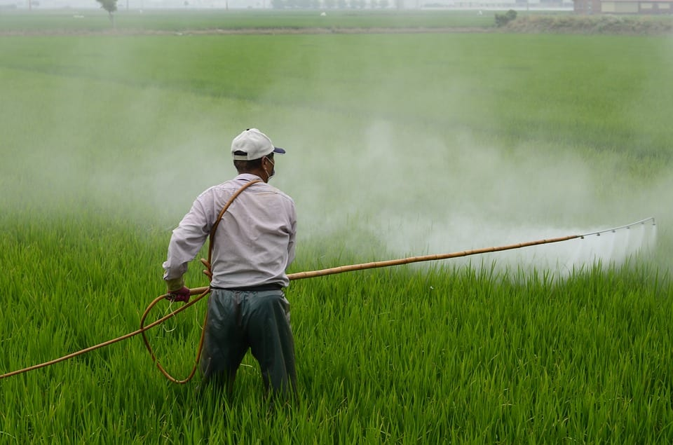 Person spraying herbicide on a field