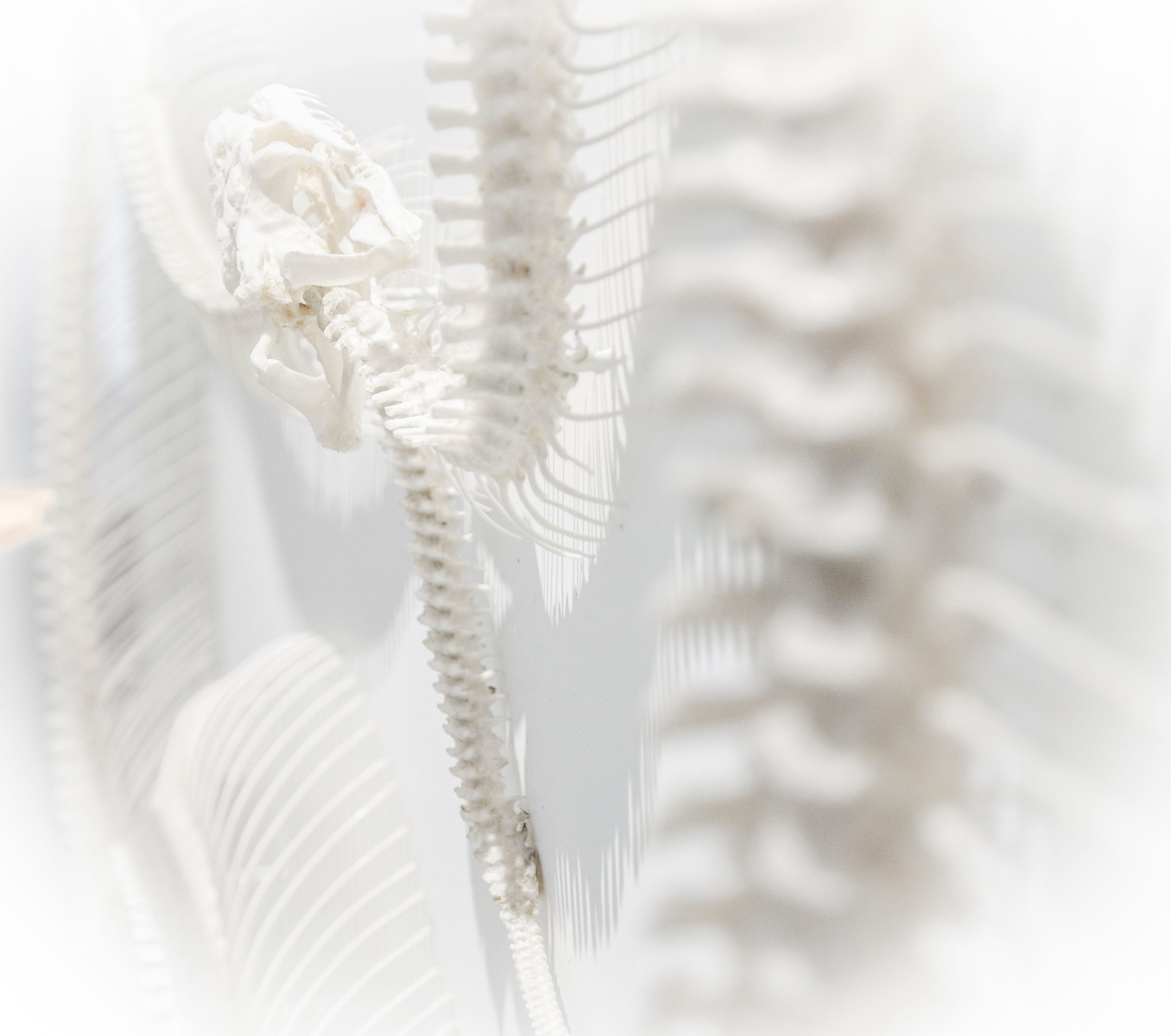 Laser Spine Institutes Closes its Doors Amid Chapter 11 Bankruptcy