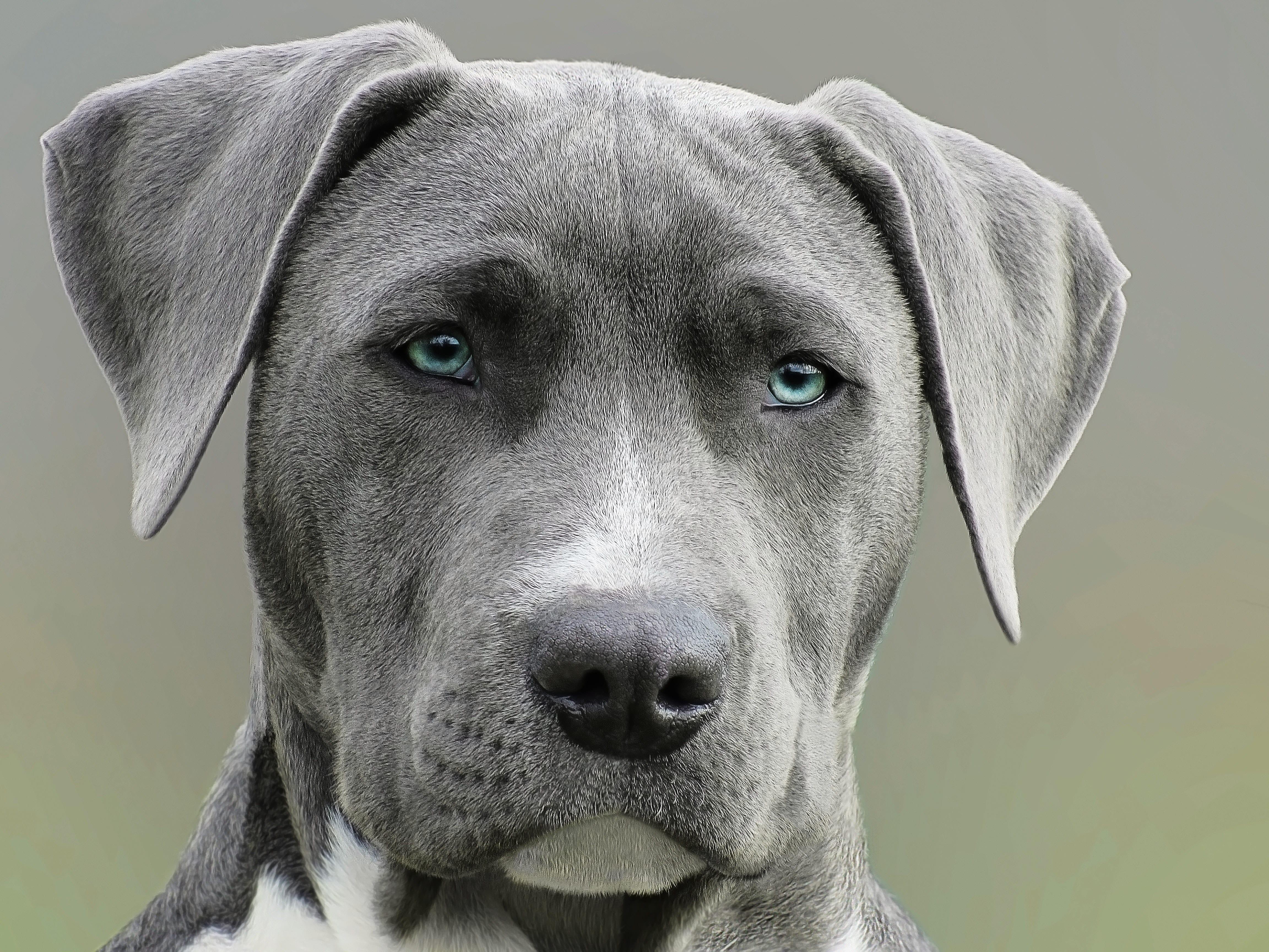 Guard dog; image by Alexandru Rotariu, via Pexels.com.