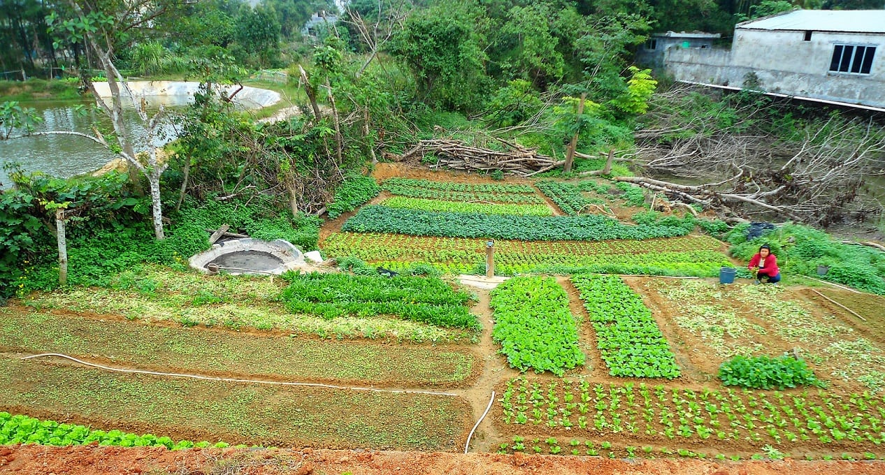 A farmer hunkers down on her small vegetable farm; plots of green growth and her house are visible around her.