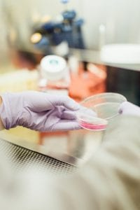 Laboratory worker examining petri dish containing pink substance; image by Drew Hays, via Unsplash.com.
