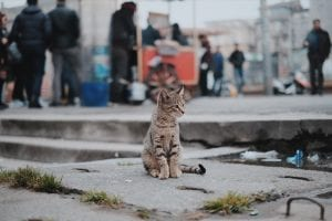 Brown tabby cat sitting on concrete; image by Emre Gencer, via Unsplash.com.
