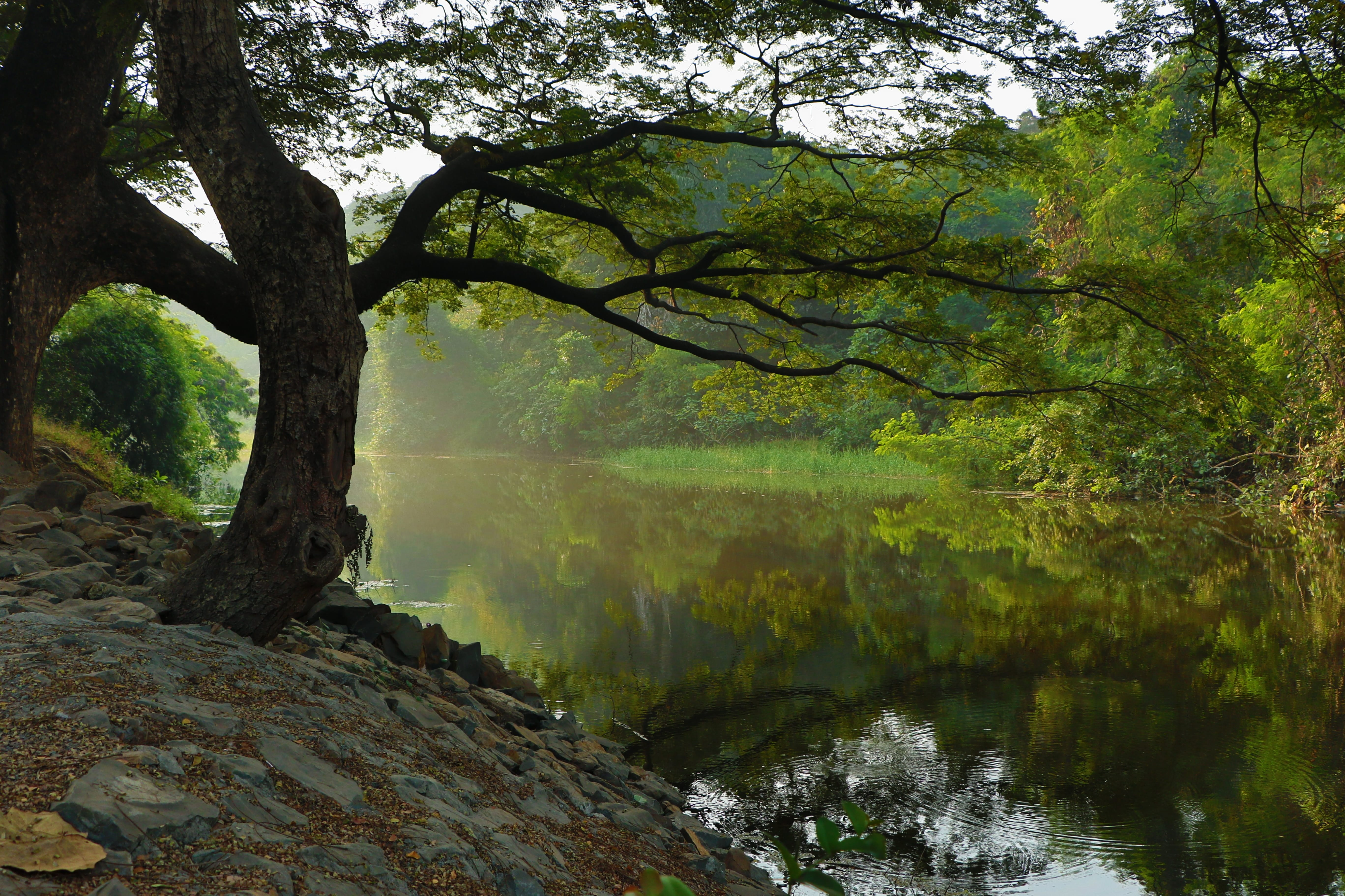 Bare tree by lake; image by Natish Kadam, via Unsplash.com.