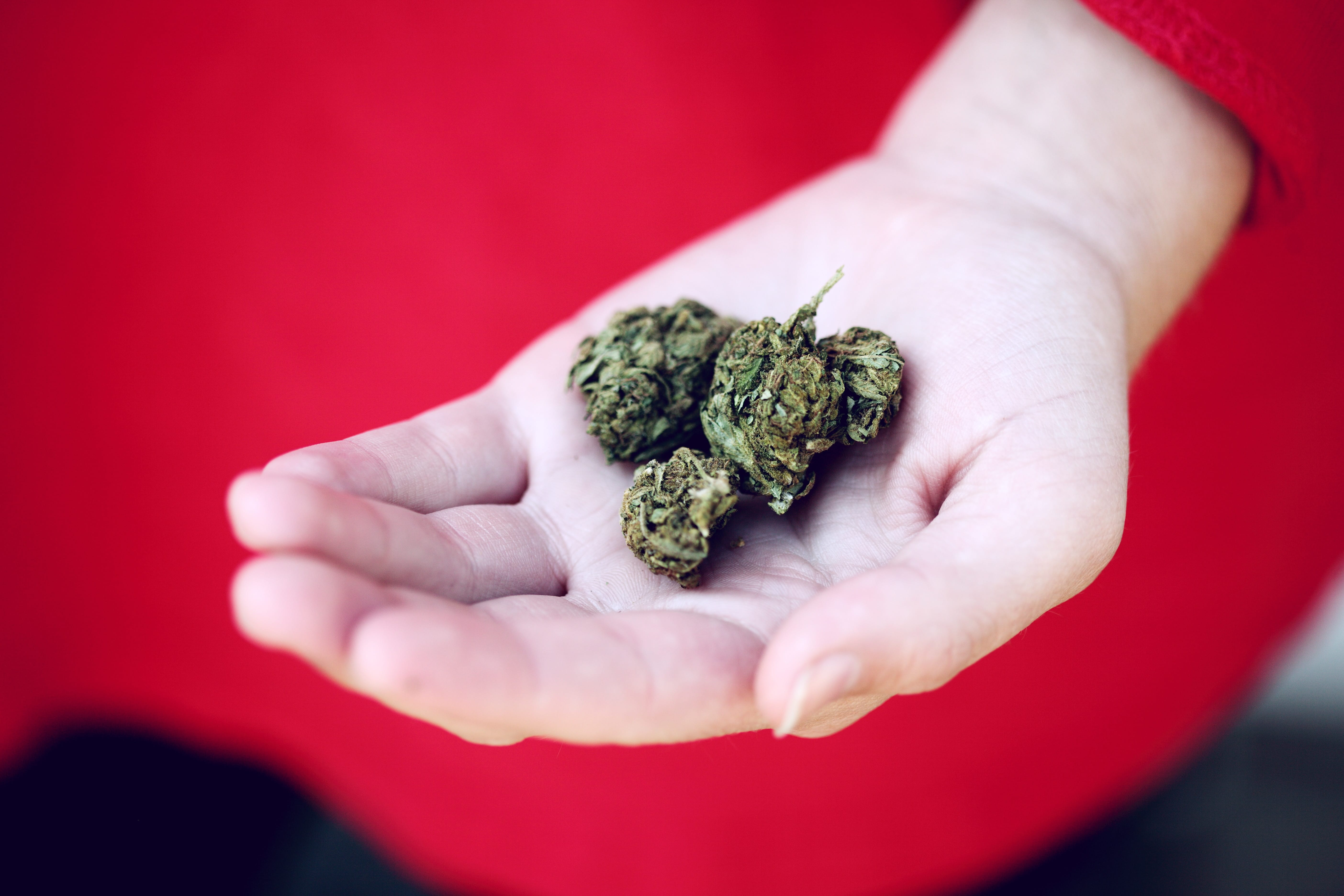 Woman in red holding marijuana buds in the palm of her hand; image by Sharon McCutcheon, via Unsplash.com.