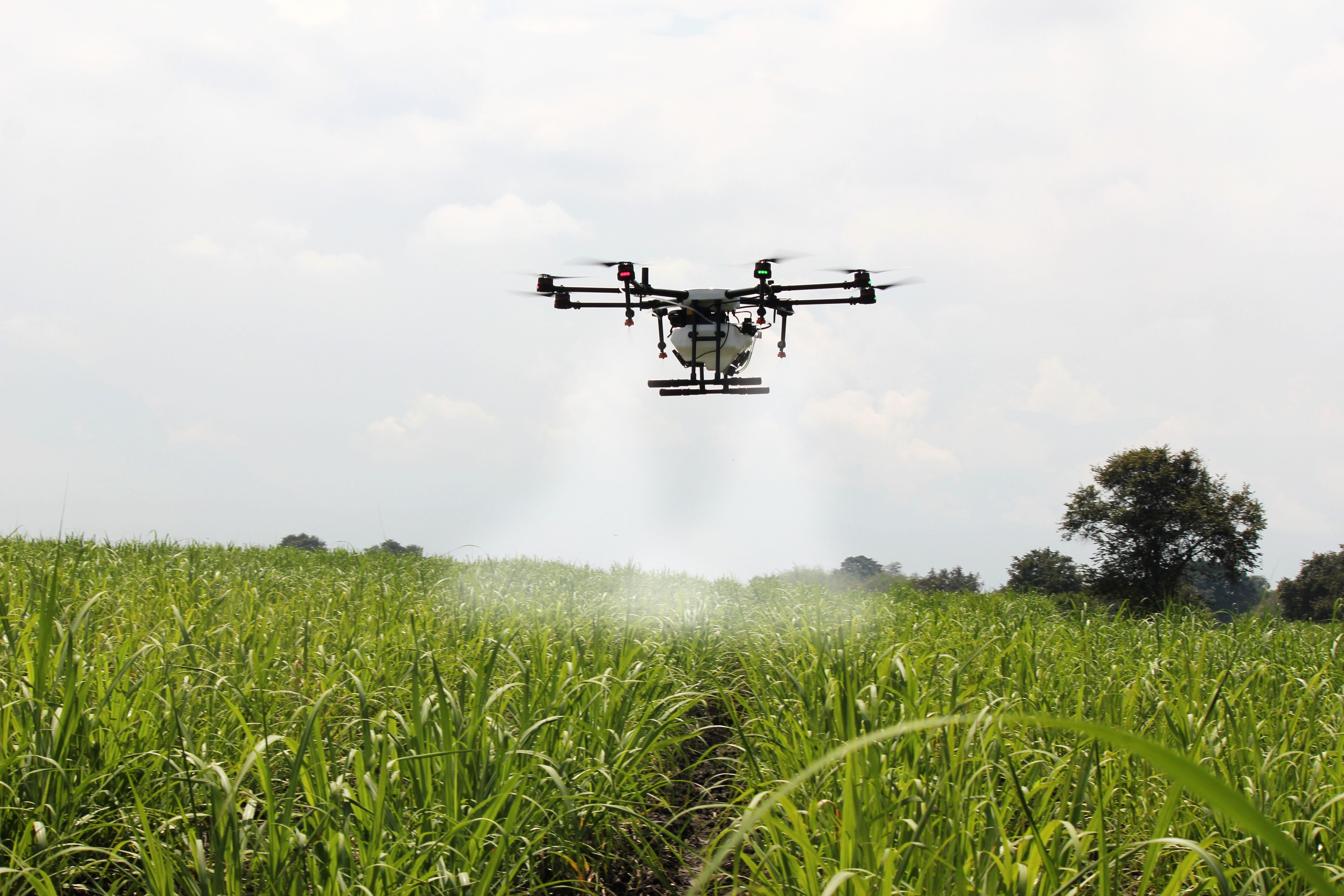 A drone flying above a field of green plants, spraying a white haze.