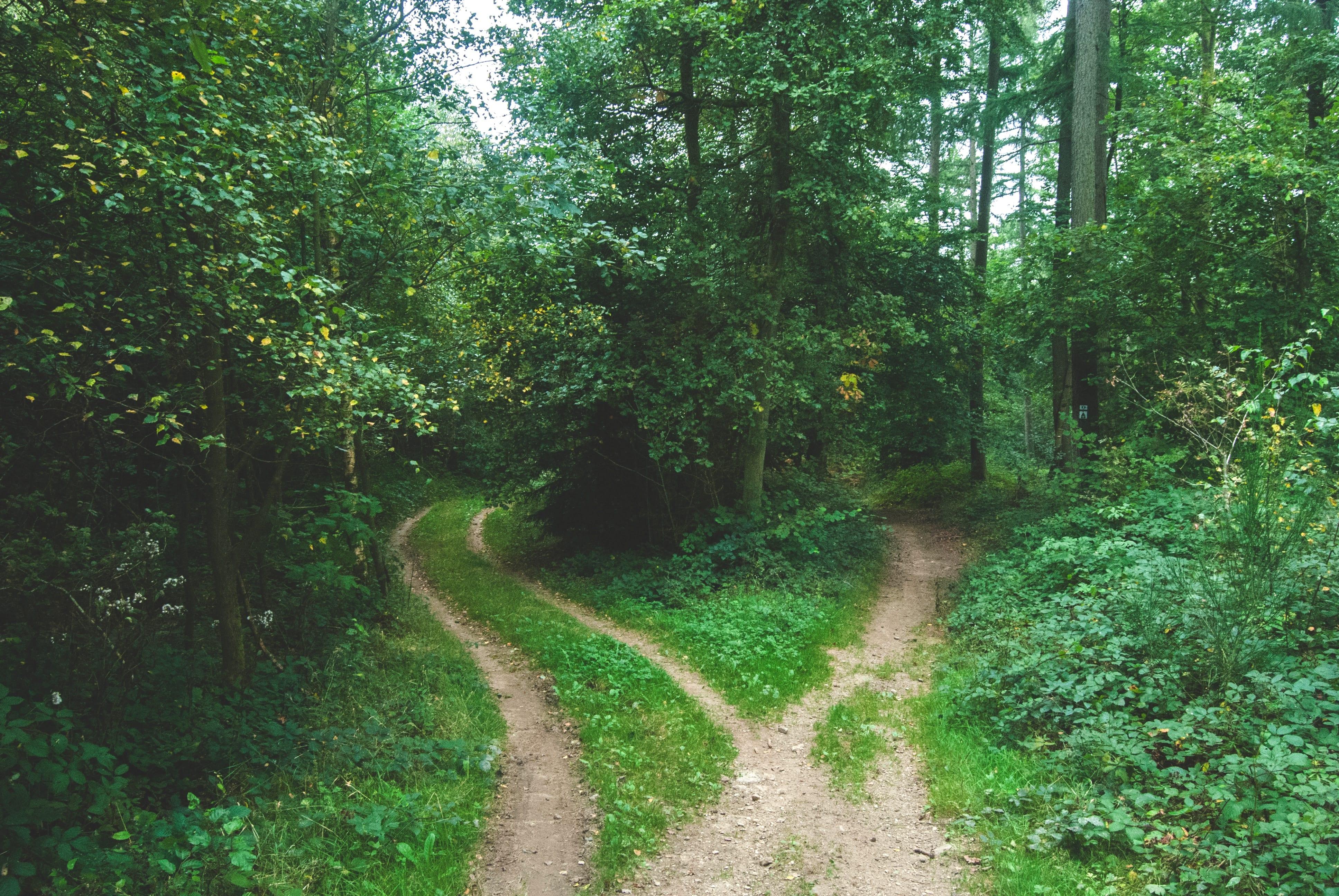 Forest path forking around trees; image by Jens Lelie, via Unsplash.com.