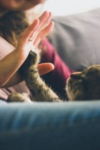 Brown tabby cat touching person's hand with paw; image by Jonas Vincent, via Unsplash.com.