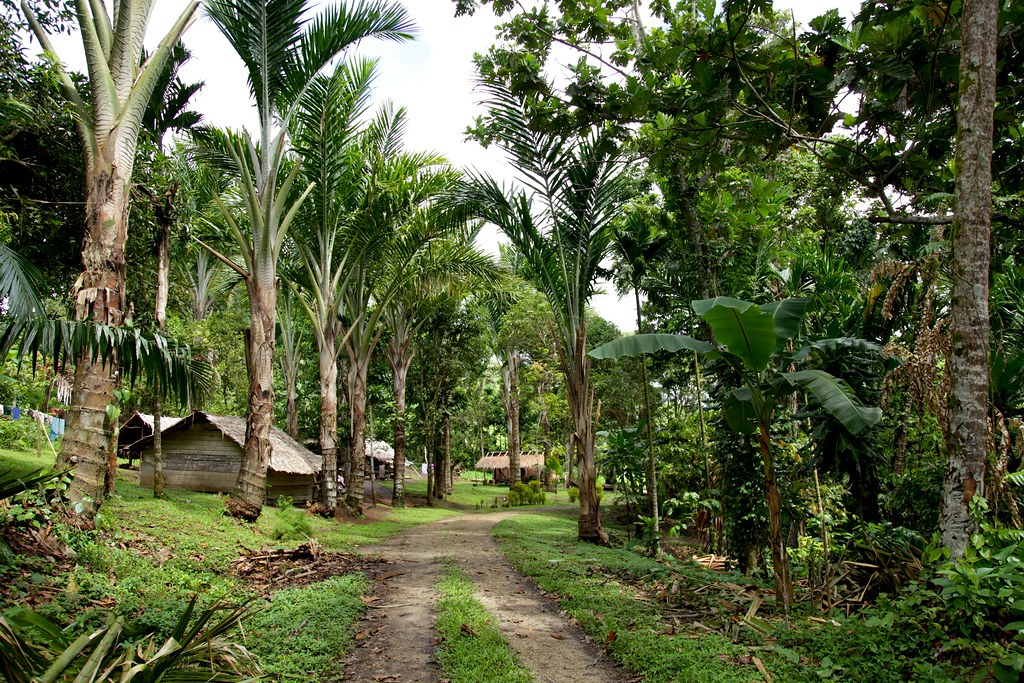 Tropical trees soar over simple dwellings made from natural materials and a narrow two-track road, surrounded by greenery.