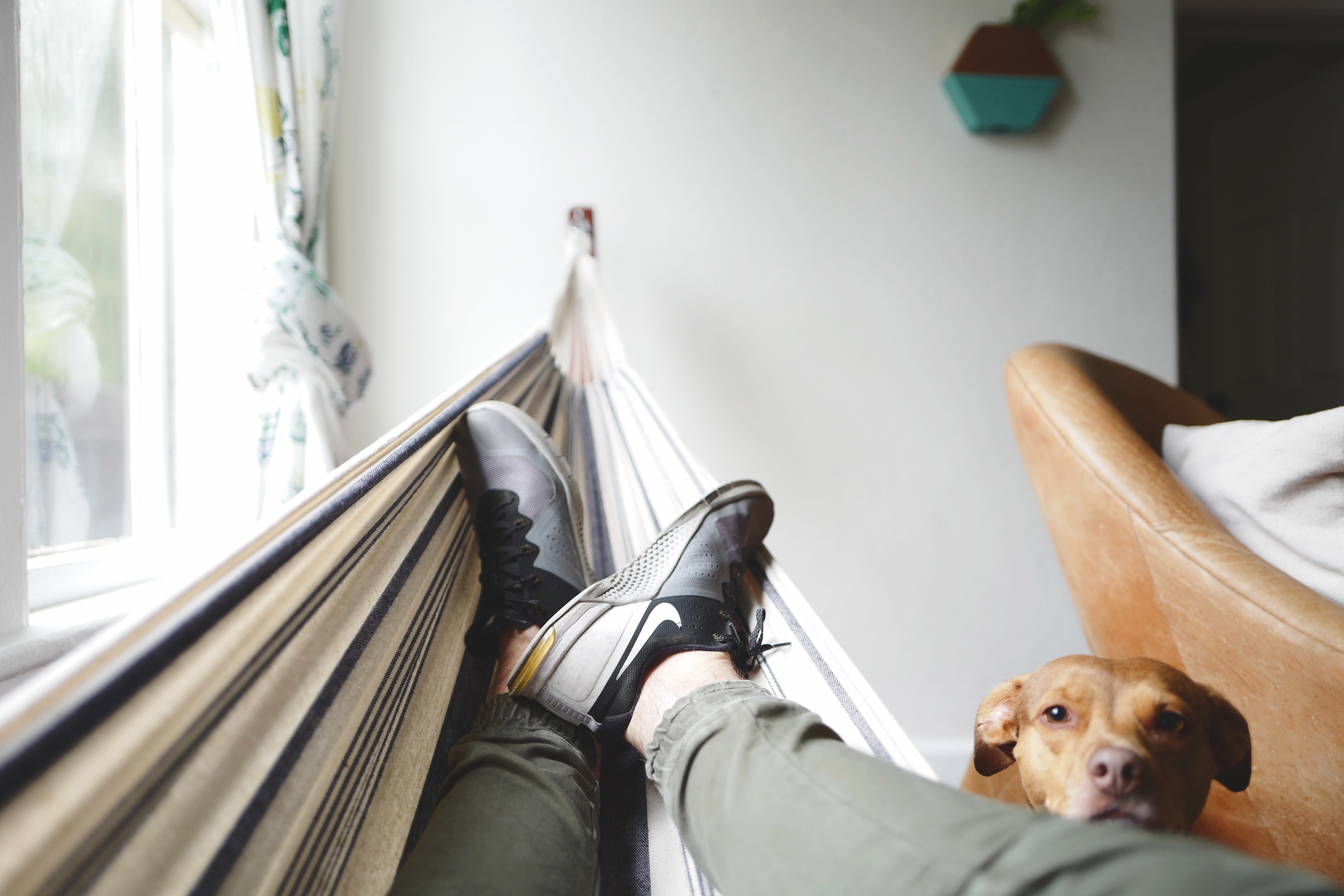 Man in hammock being watched by dog; image by Drew Coffman, via Unsplash.com.