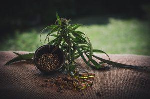 CBD plant and capsules; image by CBDinfos.com, via Pixabay.com.