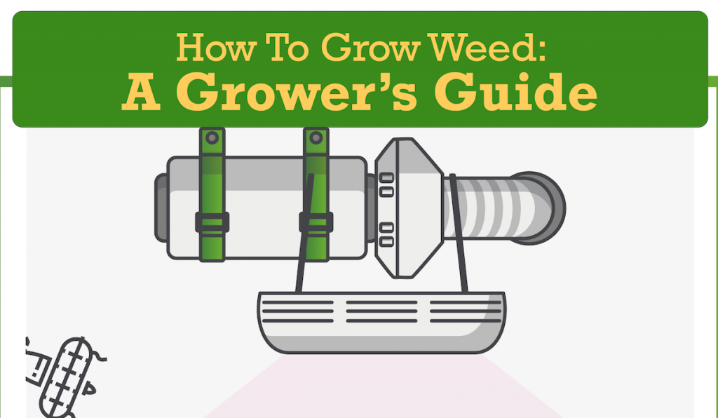 How to Grow Weed: A Grower's Guide; graphic courtesy of author.