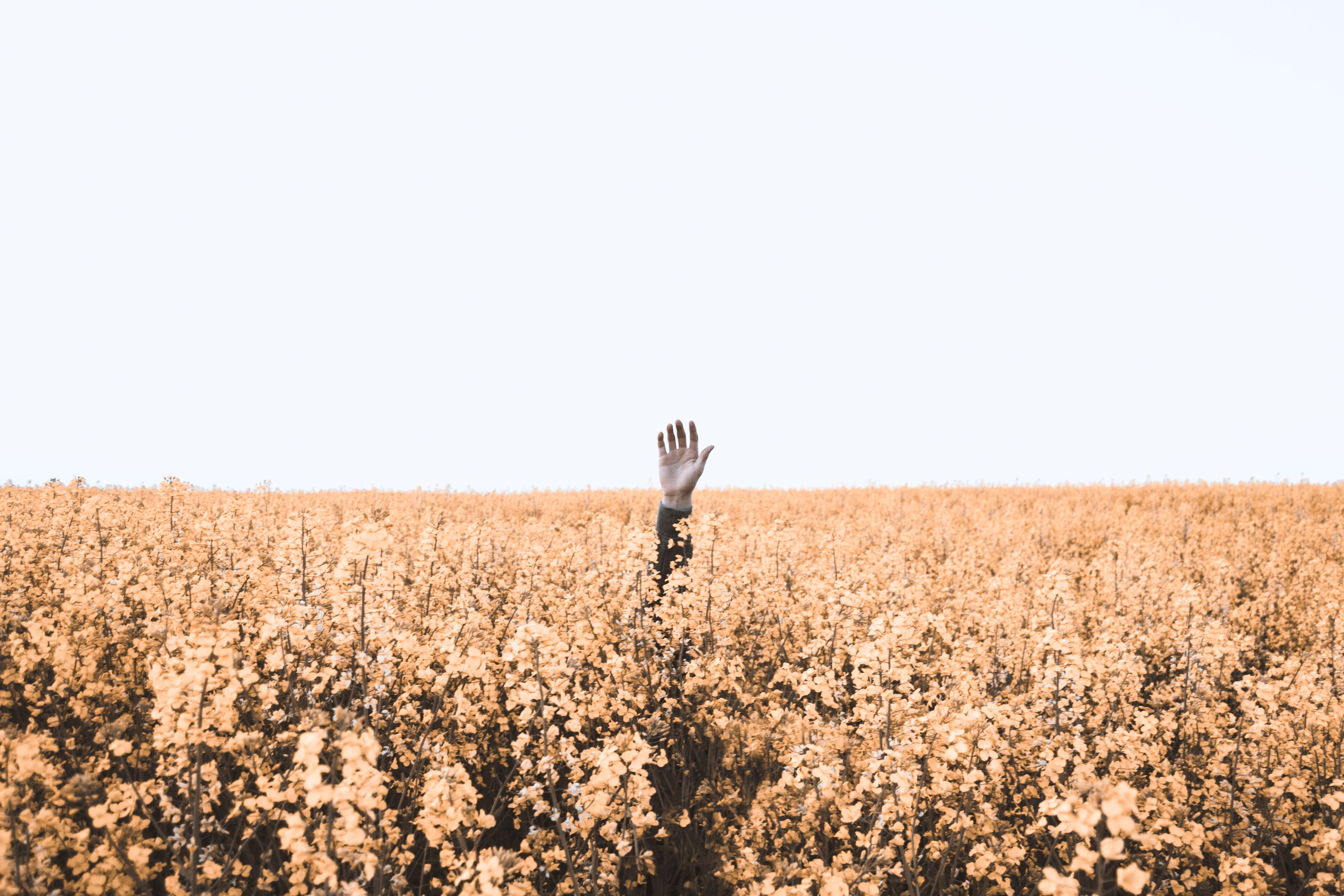 Person raising hand in a field of flowers; image by Daniel Jensen, via Unsplash.com.