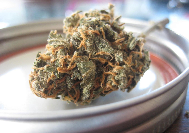 Cannabis; image by Seaweedjeezus, via Pixabay.com.