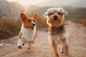 Two dogs running down a dirt road; image by Alvan Nee, via Unsplash.com.