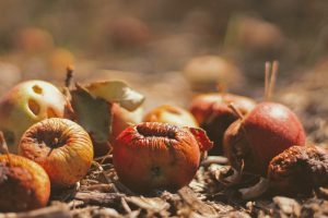 Vermont Now Requires Food Scraps to be Composted