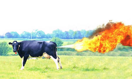 Cow farting flames; image by Purple Slog, via Flickr, CC BY 2.0, no changes.