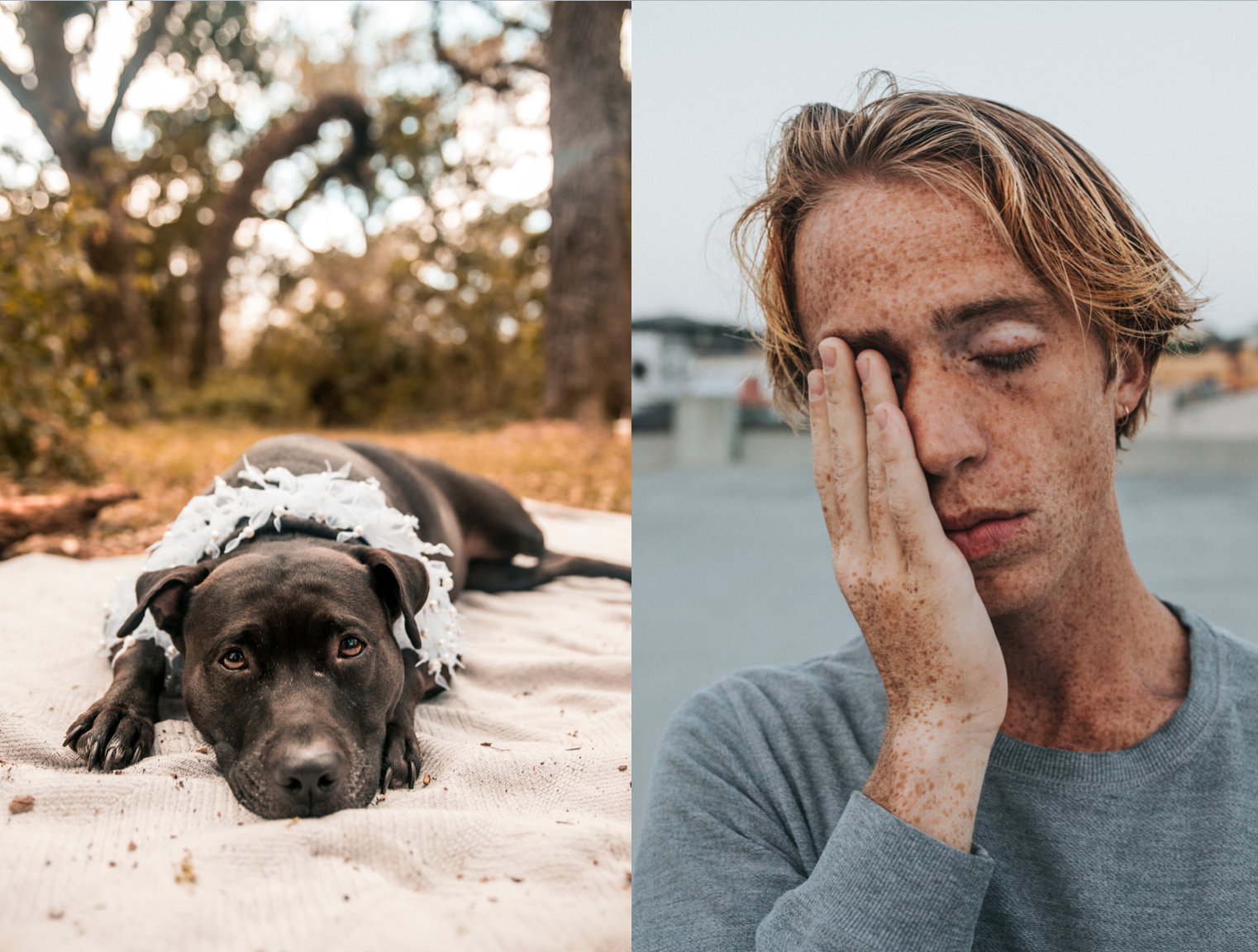 Left: Dog on the beach; image by Amaury Gutierrez, via Unsplash.com. Right: Man covering face; image by Nathan Dumlao, via Unsplash.com.