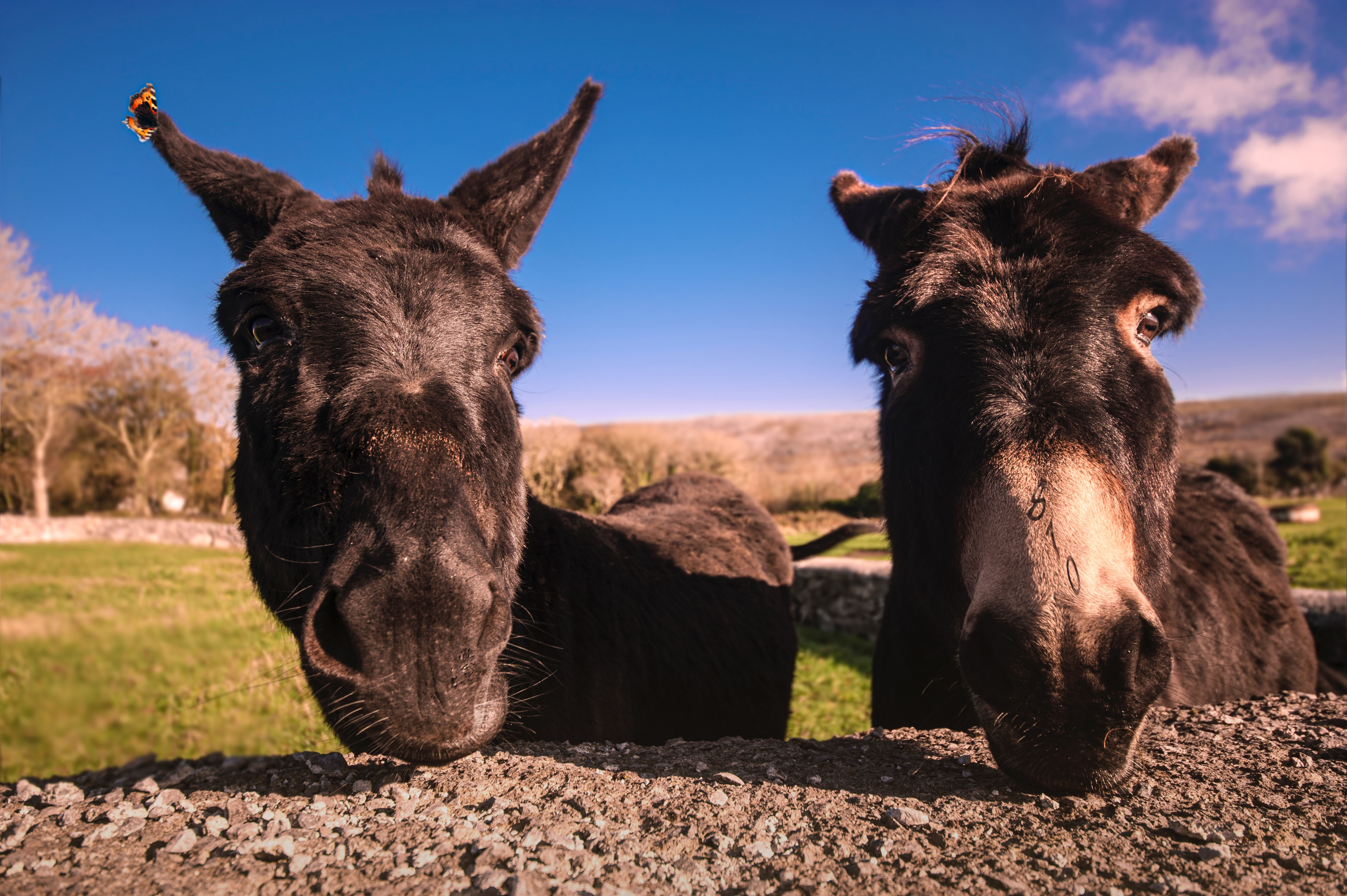 Two donkeys lamenting the loss of a comfy bathtub; image by Magdalena Smolnicka, via Unsplash.com.