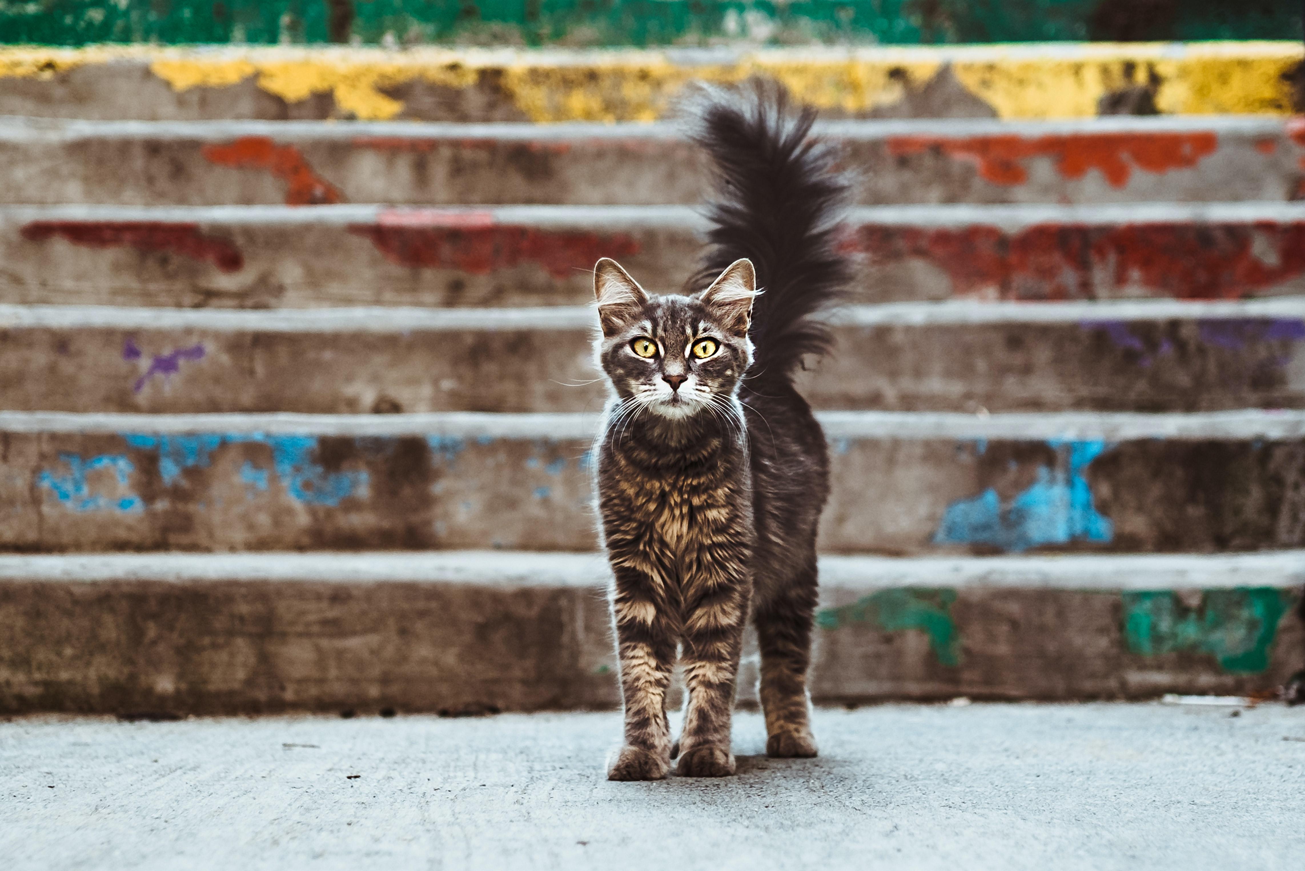 Beautiful cat by steps; image by Maria Teneva, via Unsplash.com.