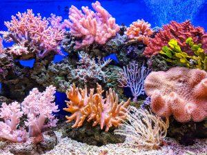 Coral reef in Vietnam; image by Q.U.I., via Unsplash.com.