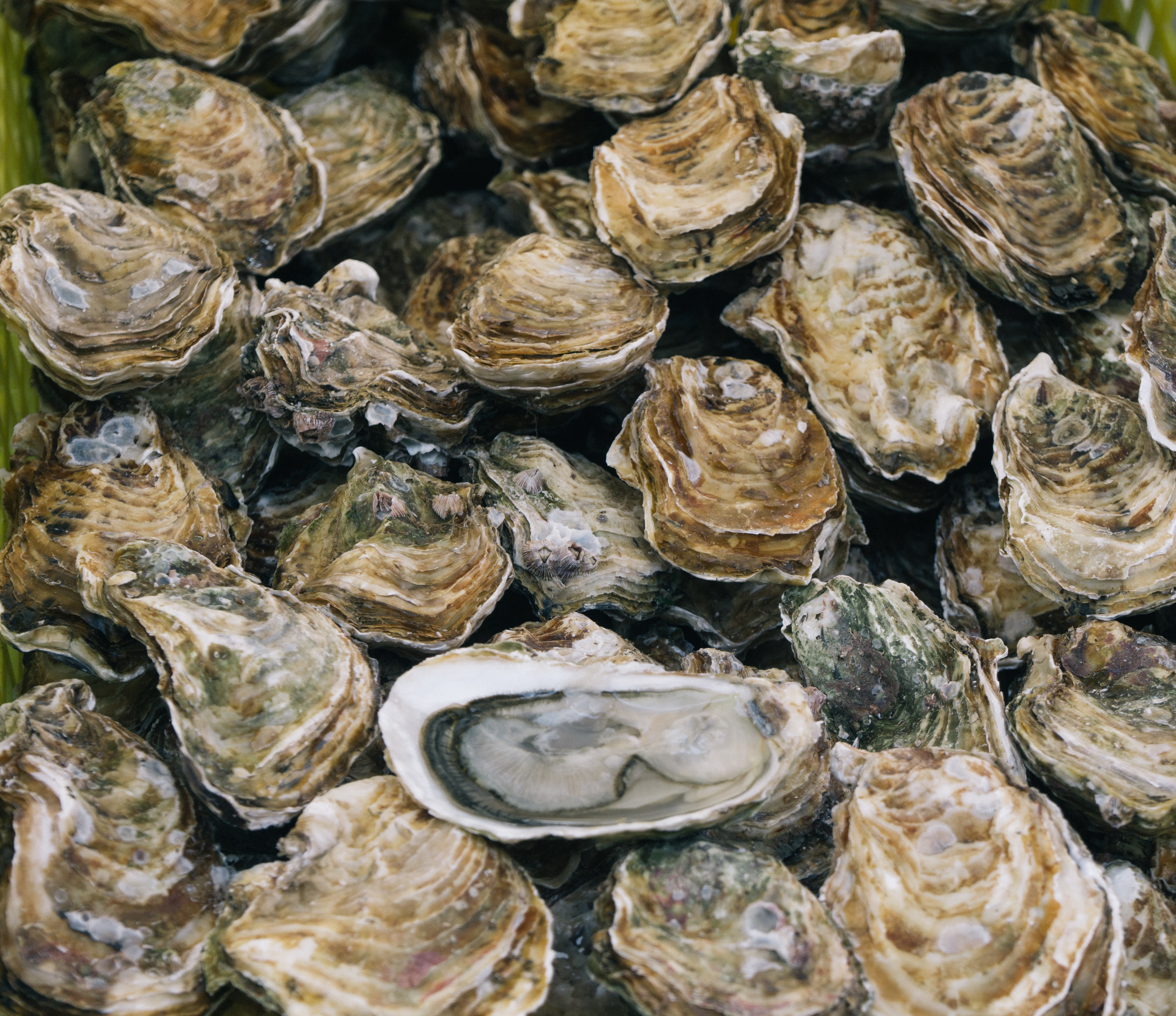 Homeowners File Land Ownership Lawsuit Over Oyster Farm Plan