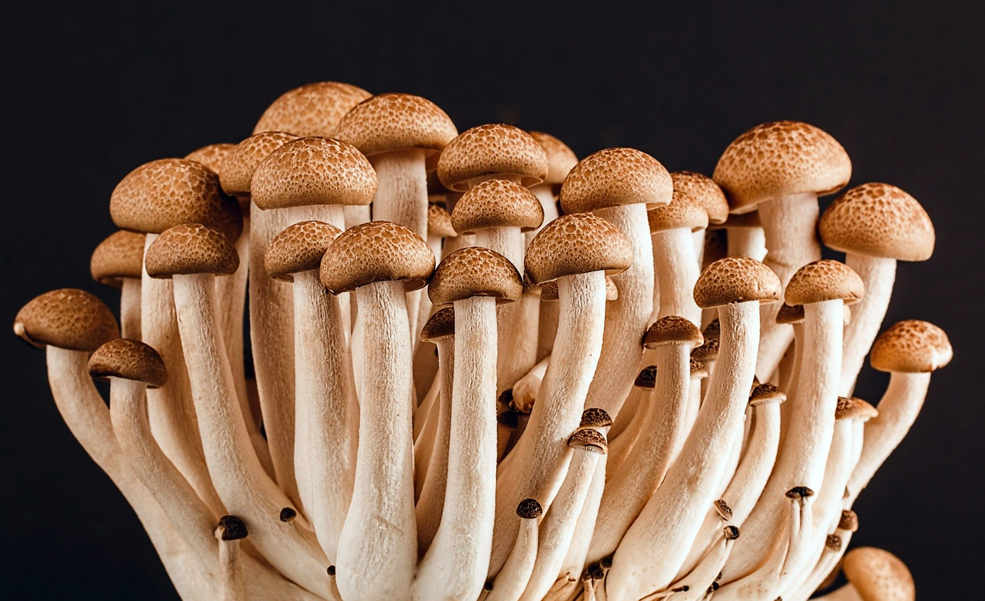 Bunch of mushrooms; image by Stevepb, via Pixabay.com.