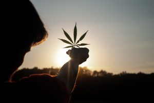 Cannabis Delivery Case Dismissed by California Judge