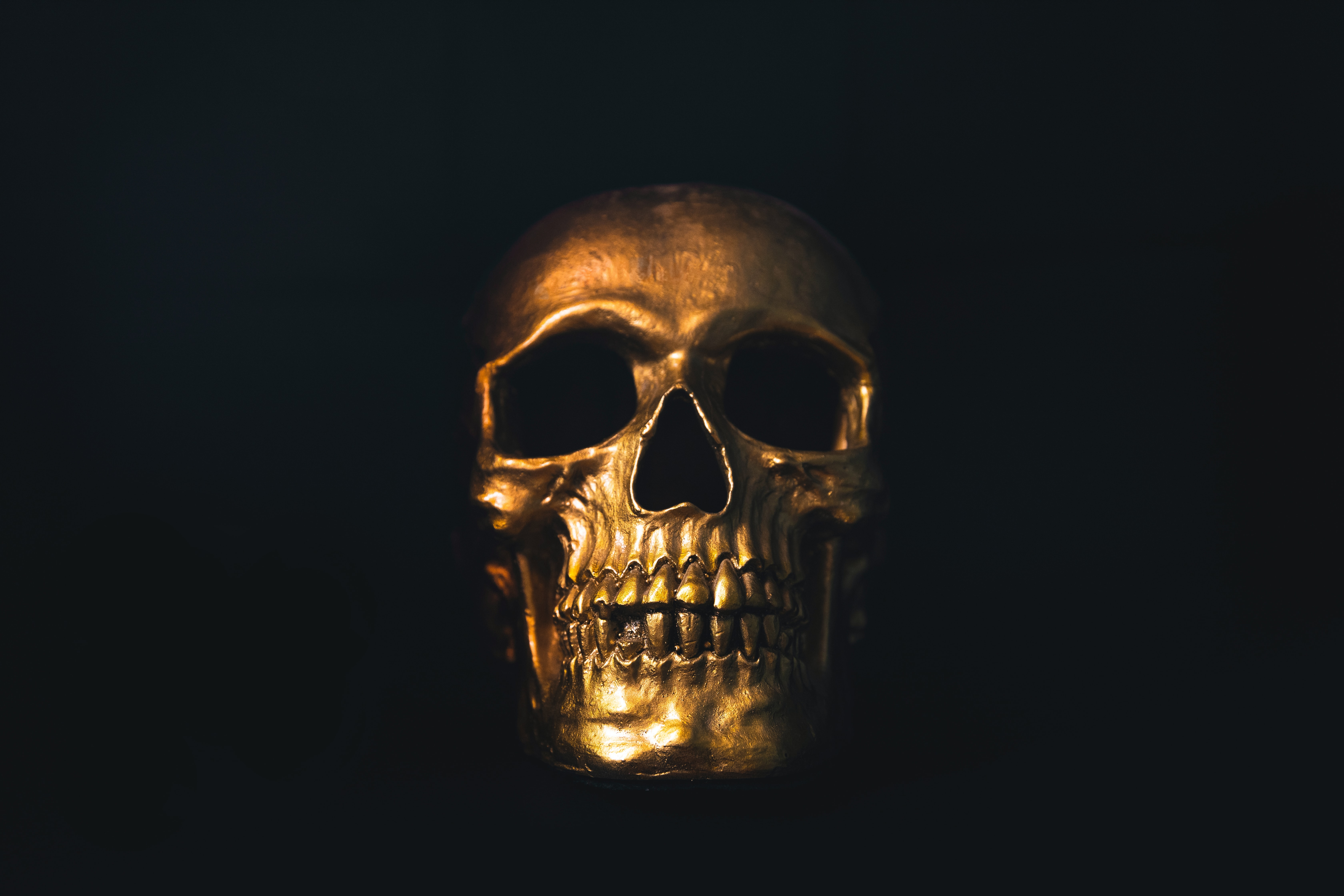 Decorative Skull, Barrel of Bones Solve Missing Persons Cases