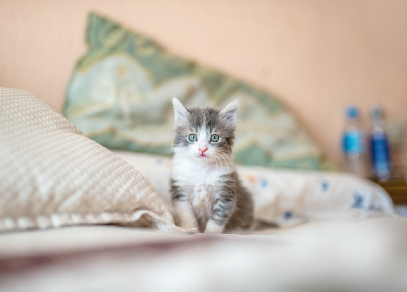 Kitten on bed; image by Kote Puerto, via Unsplash.com.